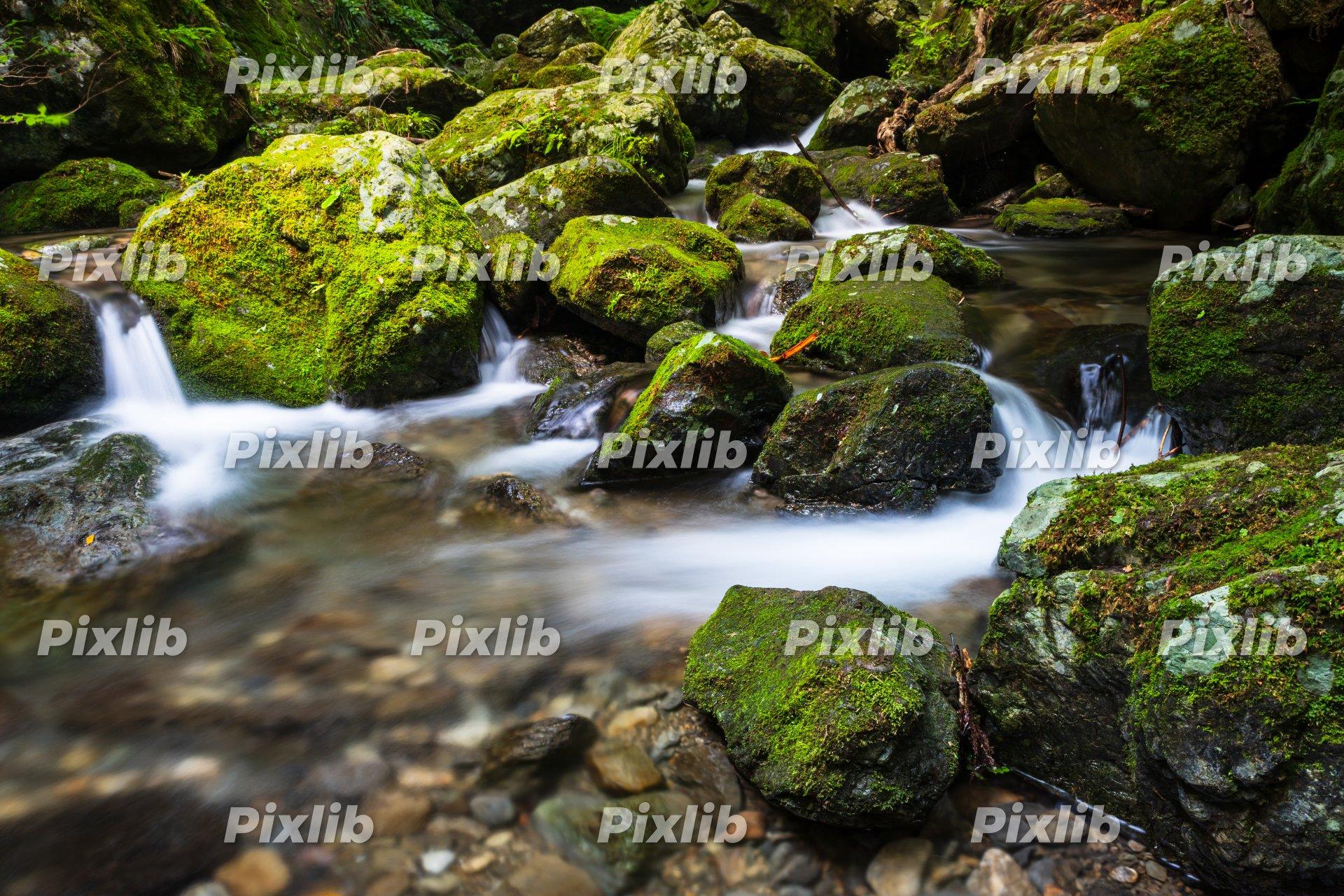 奥多摩の自然 海沢渓谷
