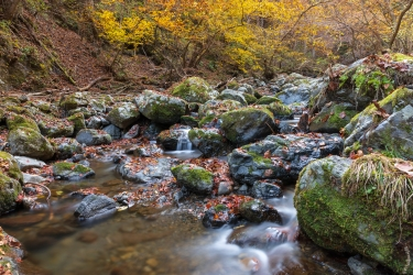 秋の海沢渓谷
