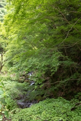 神戸川・新緑